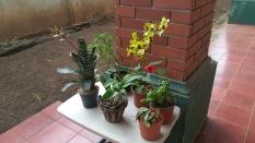 Mi plantas